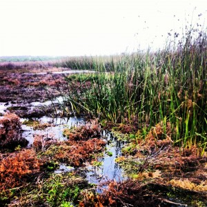 The end result of the water treatment wetland restoration project: clean water!